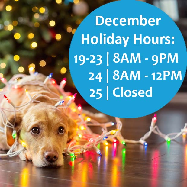 Pet Grooming Holiday Hours of Operation