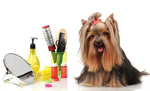 Lovely Cuts Pet Grooming