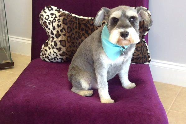Lovely_Cuts_Pet_Grooming_02