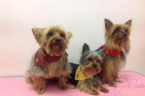 Lovely_Cuts_Pet_Grooming_03
