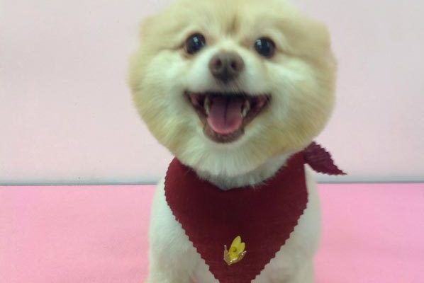 Lovely_Cuts_Pet_Grooming_05
