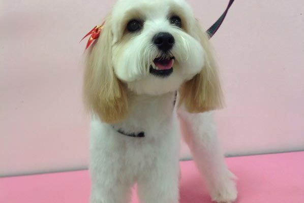 Lovely_Cuts_Pet_Grooming_08