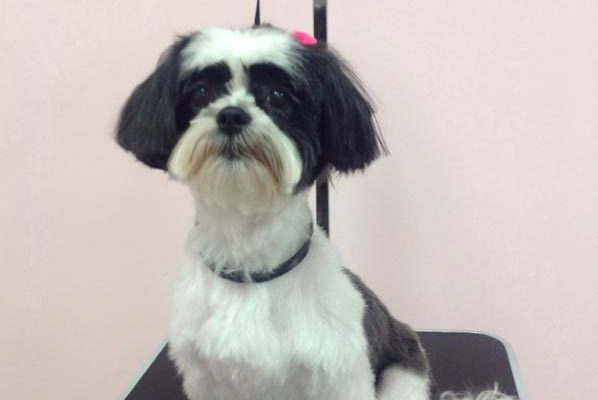 Lovely_Cuts_Pet_Grooming_10