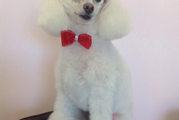 Lovely_Cuts_Pet_Grooming_14