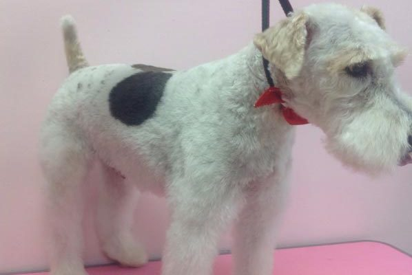 Lovely_Cuts_Pet_Grooming_15