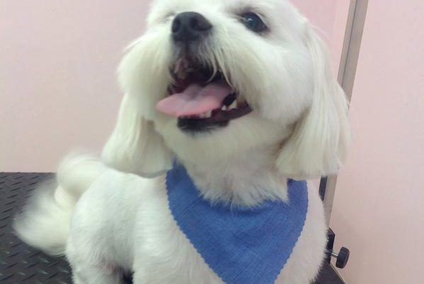 Lovely_Cuts_Pet_Grooming_20