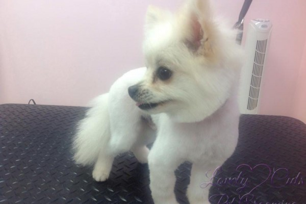 Lovely_Cuts_Pet_Grooming_21