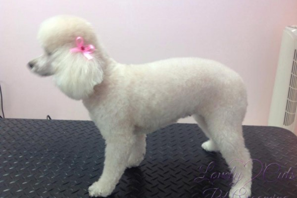 Lovely_Cuts_Pet_Grooming_24