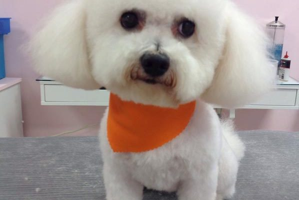 Lovely_Cuts_Pet_Grooming_31