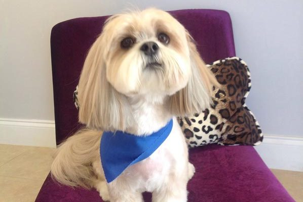 Lovely_Cuts_Pet_Grooming_33