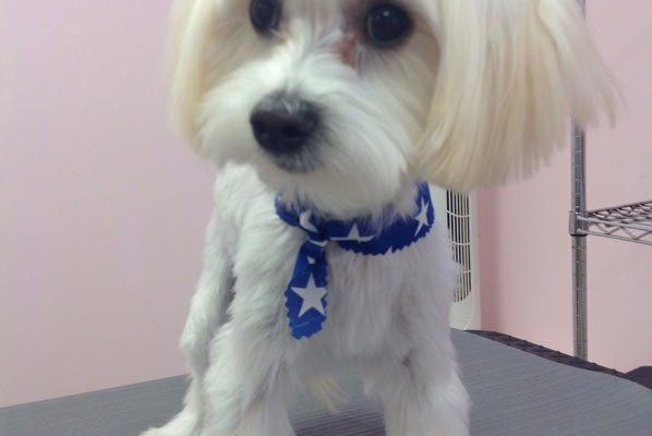 Lovely_Cuts_Pet_Grooming_37
