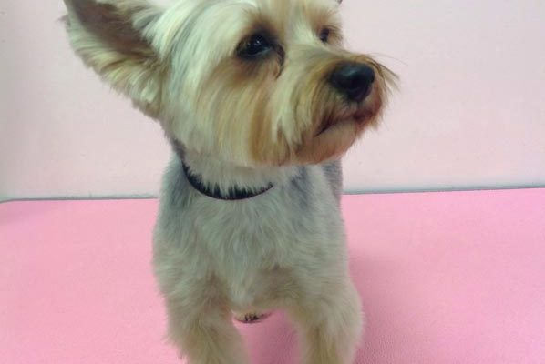 Lovely_Cuts_Pet_Grooming_40