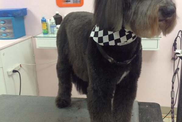 Lovely_Cuts_Pet_Grooming_46
