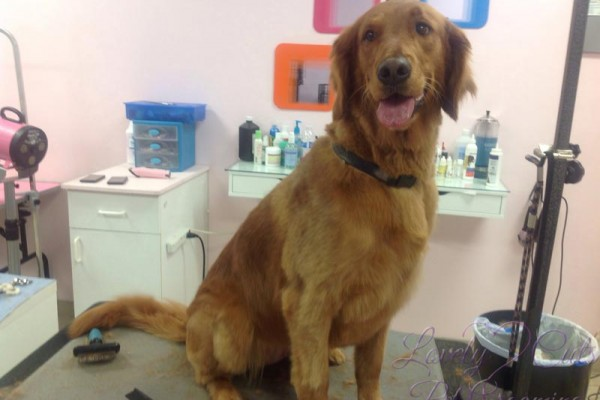 Lovely_Cuts_Pet_Grooming_56