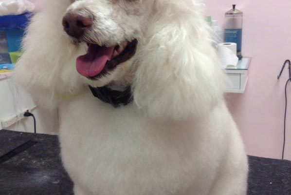 Lovely_Cuts_Pet_Grooming_Before&After_01