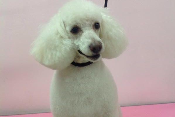 Lovely_Cuts_Pet_Grooming_Before&After_02