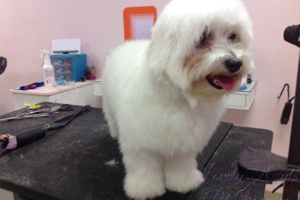 Lovely_Cuts_Pet_Grooming_Before&After_07