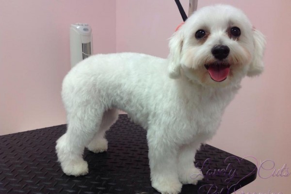 Lovely_Cuts_Pet_Grooming_Before&After_08