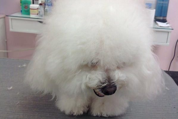 Lovely_Cuts_Pet_Grooming_Before&After_13