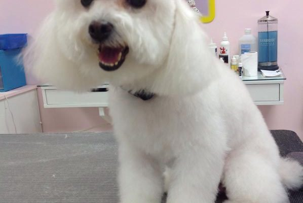 Lovely_Cuts_Pet_Grooming_Before&After_14